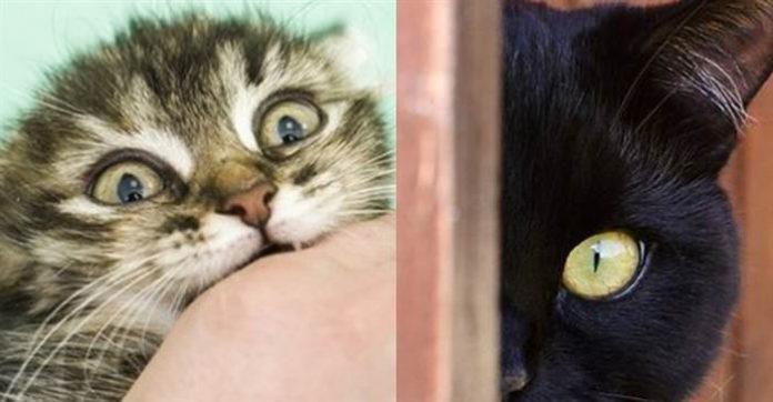 如果你的猫做了这些动作,表示牠一点也不爱你!!!在牠心理你不过就是个...
