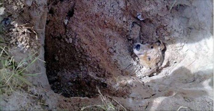 一隻的流浪狗差點被人類活埋!殘忍的行為讓人咂舌...想不到他的結局竟然是...